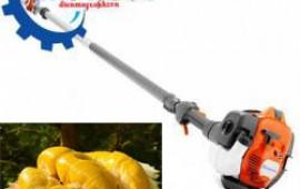 Cách cắt cành và tạo dáng cho cây sầu riêng