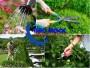 Hướng dẫn cách chăm sóc cây nhờ máy cắt tỉa hàng rào