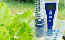 Những điều cần biết trong trồng cây thủy canh