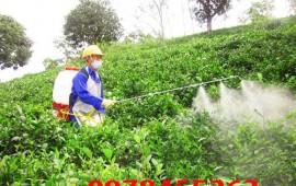 Sử dụng máy bơm thuốc trừ sâu đúng cách