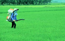 Phương pháp bón phân cho lúa hiệu quả