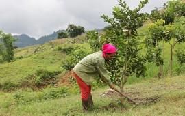 Giải pháp đào hố trồng cây vùng đất đồi núi