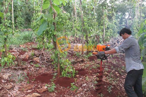 Ứng dụng máy khoan lỗ trồng cây